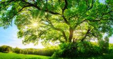 hoom tree of life virtual class